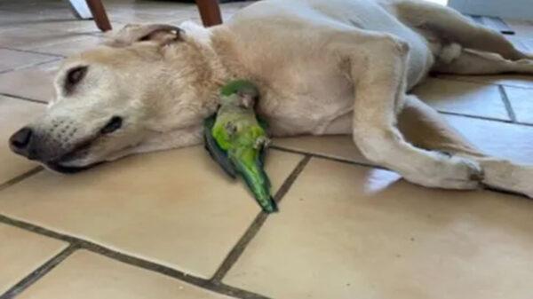 Aunque no es muy común la amistad entre los animales de otras razas, cuando se dan estos vínculos pueden enternecer a cualquiera
