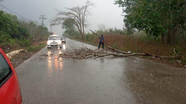 En Kantunilkín despejan carretera de árboles caídos por fuertes vientos.