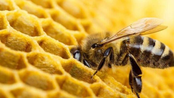 Hombre muere tras ser atacado por abejas en Texas
