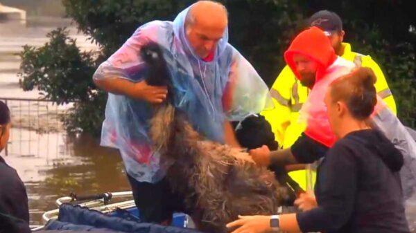 Las mascotas son parte de la familia y eso lo sabe bien un abuelo australiano, quien no dudo en arriesgar su vida para salvar a su compañero de vida