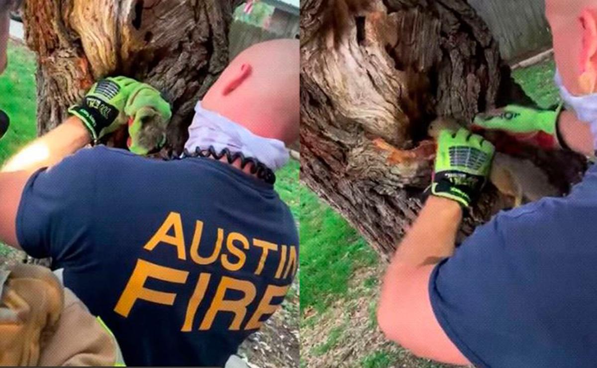 Tremendo susto se llevó una pequeña ardilla, quien tuvo que ser rescatada por los bomberos en la ciudad de Austin, Texas, Estados Unidos