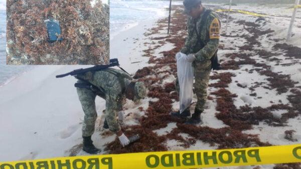 Cinco kilos de mariguana son asegurados por la Sedena en Cozumel