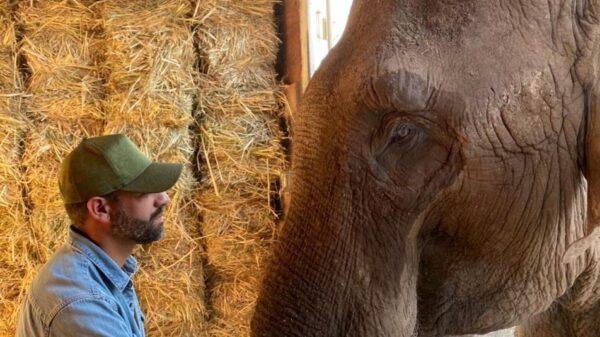 """Denuncian fraude en la venta del elefante """"Big Boy"""" a Mauricio Islas"""