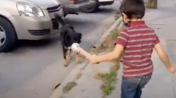 Niño se vuelve viral tras entrevistar a perritos de la calle