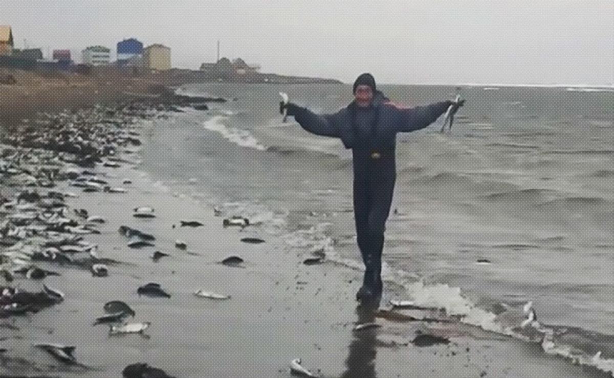 Un extraño fenómeno se registra en una playa del suroeste de la isla rusa Sajalín, donde ha aparecido cientos de peces arenques