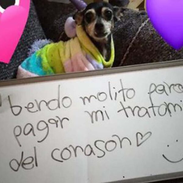 El amor por nuestras mascotas incentiva la creatividad, prueba de ello, es la curiosa foto de un perrito sosteniendo el letrero donde promueven la venta de mole