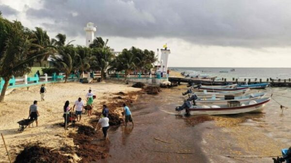 Salen a flote contratos millonarios para recoja fantasma de sargazo en Puerto Morelos.