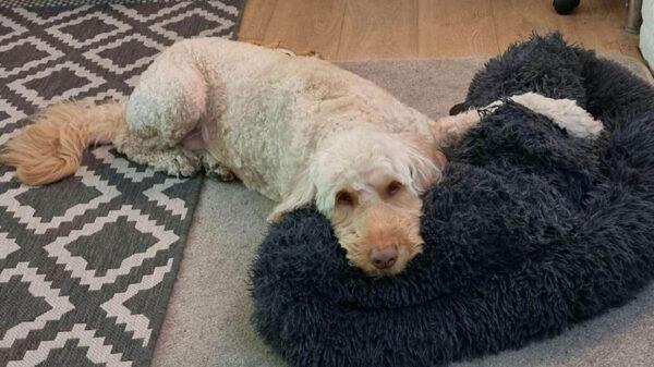 Las manías de nuestras mascotas suelen llenarnos de alegría y más si estas van acompañadas de amor, ese es el caso de la perrita Dora