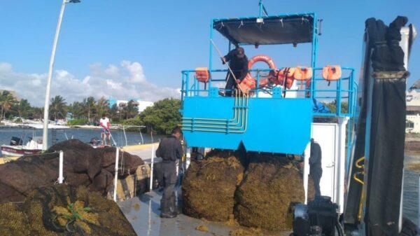 Nuevos lineamientos para la recolección de Sargazo en Quintana Roo; presentan las Secretaría de Marina y Medio Ambiente estrategias para contención de macroalgas..