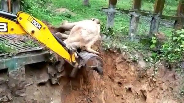 Ayudar a los animales en aprietos puede ser satisfactorio, pero que esto muestren una actitud de agradecimiento es inusual, ese es el caso de un elefante de la India