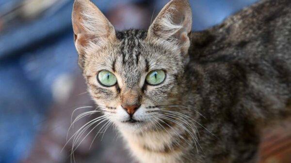 El caso de una anciana que murió en su casa sin que nadie se percatara del hecho, se viraliza, ya que parte de su cuerpo fue devorado por sus siete gatos