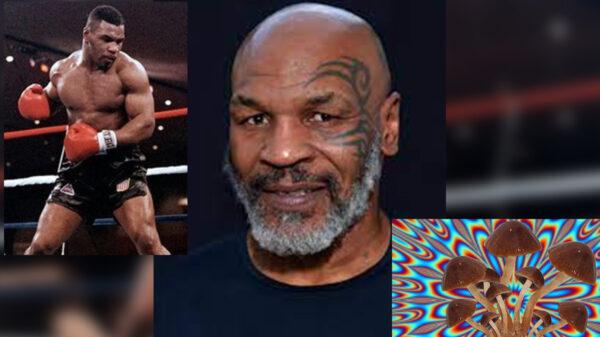 Mike Tyson, salvado por los hongos alucinógenos