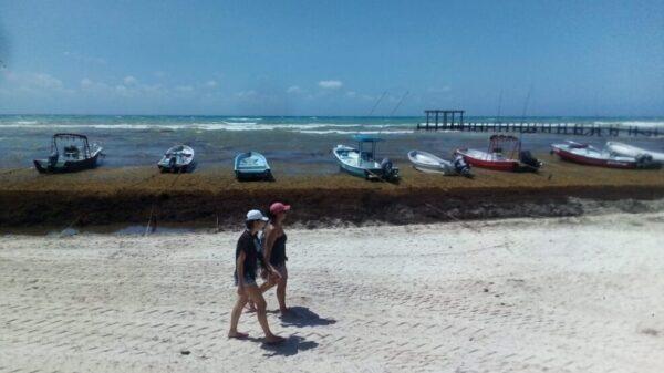 Sargazo afecta a pequeños hoteles de Playa del Carmen.