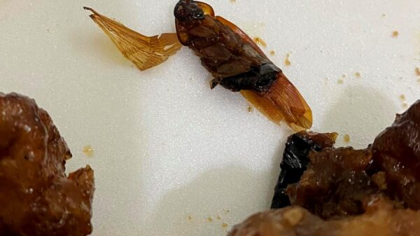 Mérida: Joven compra comida y encuentra al interior de su platillo una cucaracha