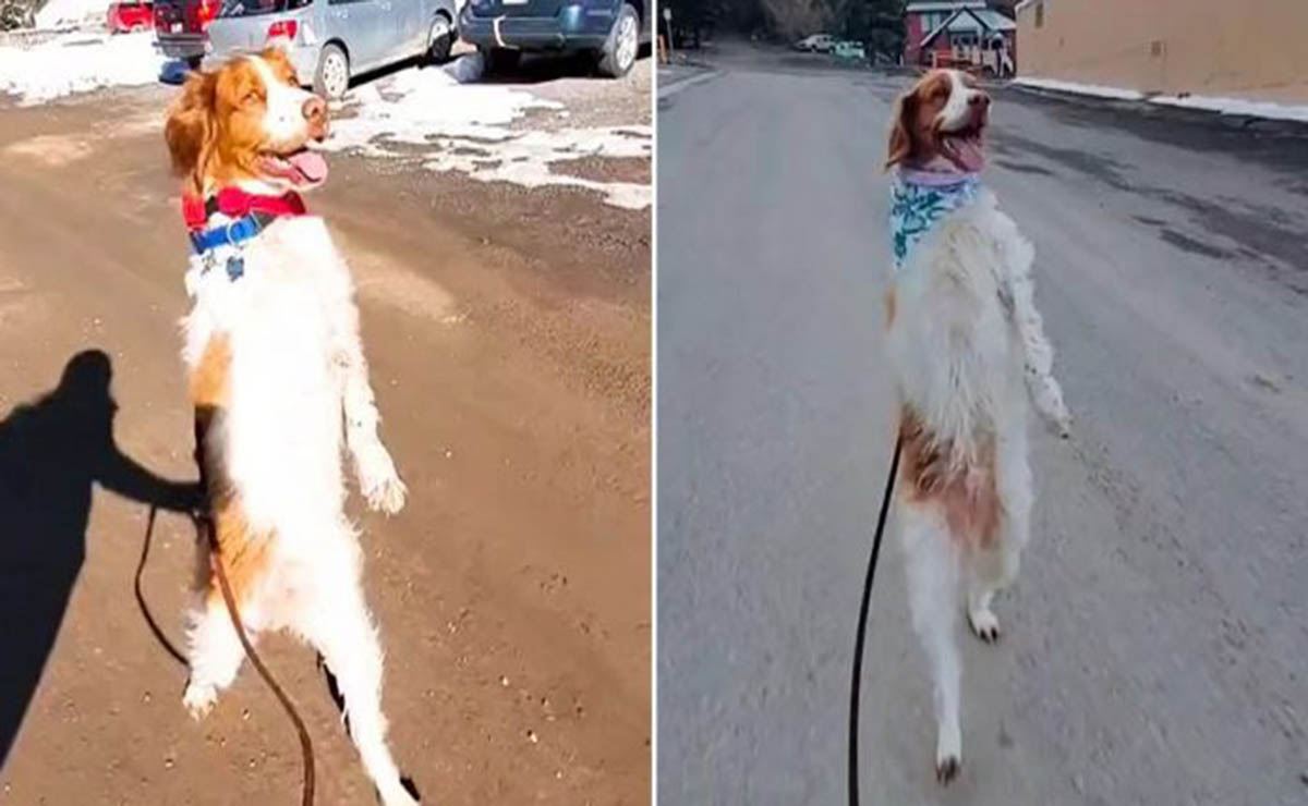 Los perros suelen reponerse ante los desafíos y a pesar de sus difíciles circunstancias salen adelante, ese es el caso de Dexter