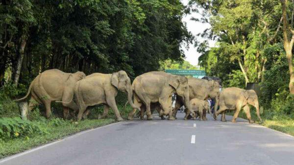 Una plantación de banano en una aldea del estado de Tamil Nadu, en el sureste de la India, fue arrasada por un grupo de elefantes