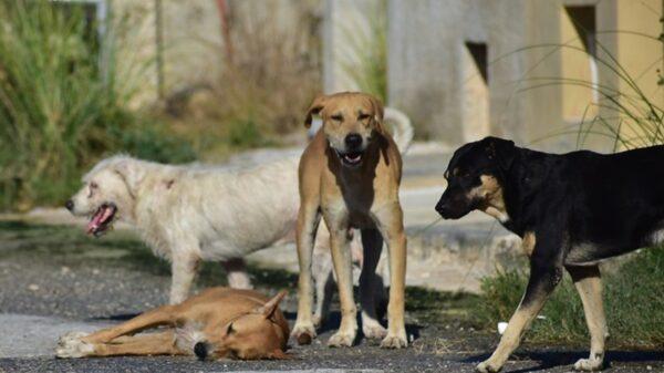 Casos de maltrato animal en Yucatán ya podrán ser multados