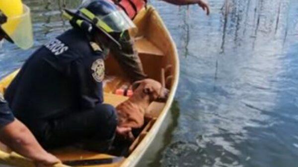 Autoridades rescatan a perrito que iba a morir ahogado en el acuaparque de Mérida