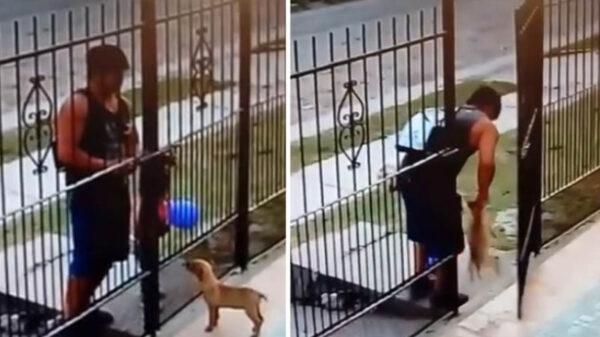 Quintana Roo: Castigarán hasta con 3 años de cárcel el robo de mascotas.