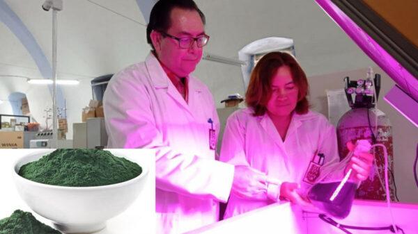 Buscan fortalecer sistema inmune con proteínas de alga Spirulina