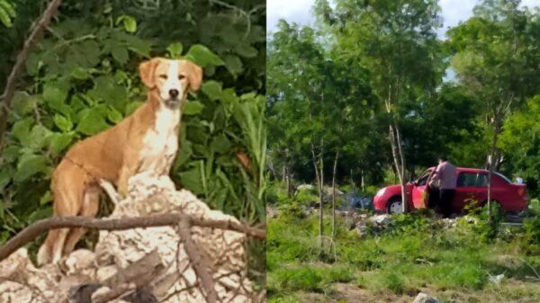 Denuncian en redes a sujeto que abandonó a un perrito en montes de Ciudad Caucel