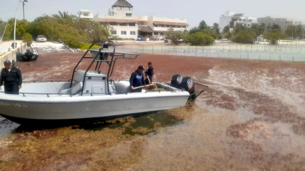 Instalarán mesas de trabajo por crisis por sargazo en Quintana Roo