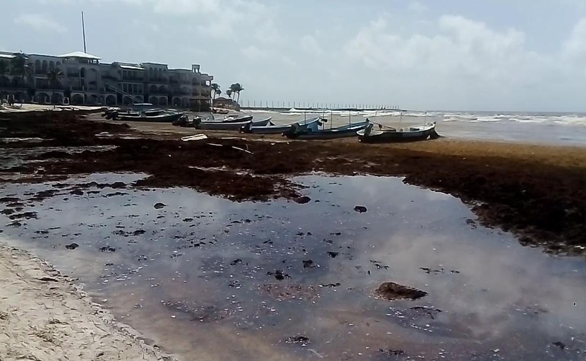 Iniciará operaciones Consejo Antisargazo de Playa Del Carmen