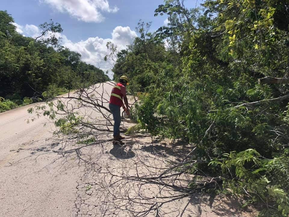 Retiran árbol que obstruía la carretera Solferino-Chiquilá; trabajadores del Ayuntamiento pusieron manos a la obra.
