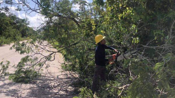 Retiran árbol que obstruía la carretera Solferino-Chiquilá.