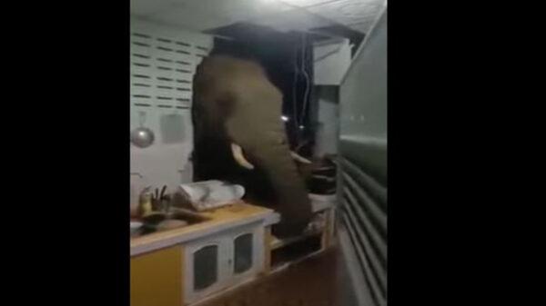 Una familia del sur de Tailandia se llevaron tremendo susto, luego que en la madrugada escucharon un estruendoso ruido que provenía de la casa