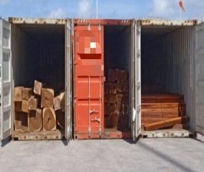 Golpe de la FGR a traficantes de madera en Yucatán.