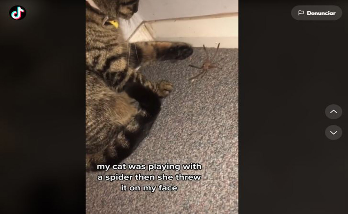 Mientras grababa un clip de su gato que jugaba con una araña, una mujer se llevó tremendo susto y su reacción se viraliza en redes sociales