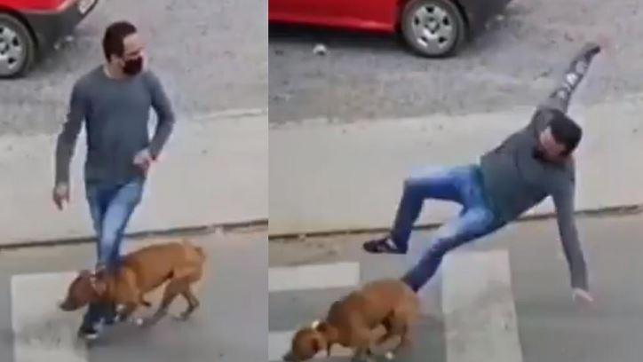 Tras hacerse viral el hombre que fue atropellado por un perro mientras cruzaba una calle, en las redes sociales se desató un alud de memes