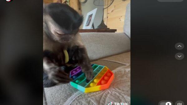 Gaitlyn Rae, tiene más de 7 millones de seguidores en TikTok y hace unos días enloqueció la red en el que alivia su estrés con el juguete pop-it