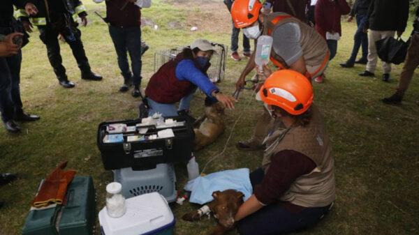 Elementos de Protección Civil de Puebla y Bomberos, rescataron a Spay y Spike, lo dos perritos que cayeron por accidente en el socavón