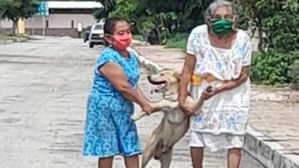 Las fotos de unas señoras que rescatan a un peludo que se escapa de su casa se popularizan en redes sociales