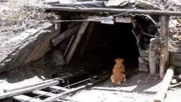 Un fiel perrito espera a su amo afuera de la mina de Coahuila donde murieron varios trabajadores, tiene la esperanza de verlo salir