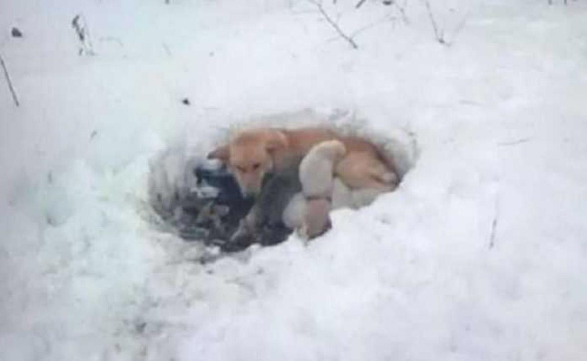 La historia de una perrita que arriesgó su vida por salvar a sus cachorros se ha robado el corazón de los cibernautas