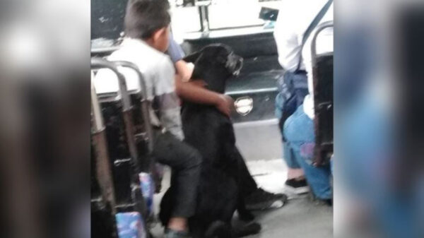 A pesar de la difícil situación que se vive en México por la pandemia, hay acciones que nos sacan una sonrisa y ese es el caso de un chofer de autobús en Puebla
