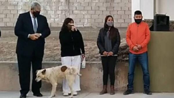 Lo único que me falta es que me orine un perro, es un dicho popular para referir mala suerte, pues bien, eso le sucedió a la presidenta municipal., Susana Prieto