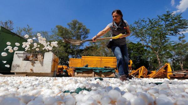 El Río Santiago, considerado uno de los más contaminados del país comenzará a sanearse con cáscaras de huevo