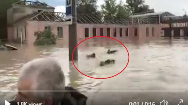 En redes sociales se viraliza el clip en el cual se acusa al gobernador de la ciudad de Kerch, de supuesto maltrato contra sus colaboradores