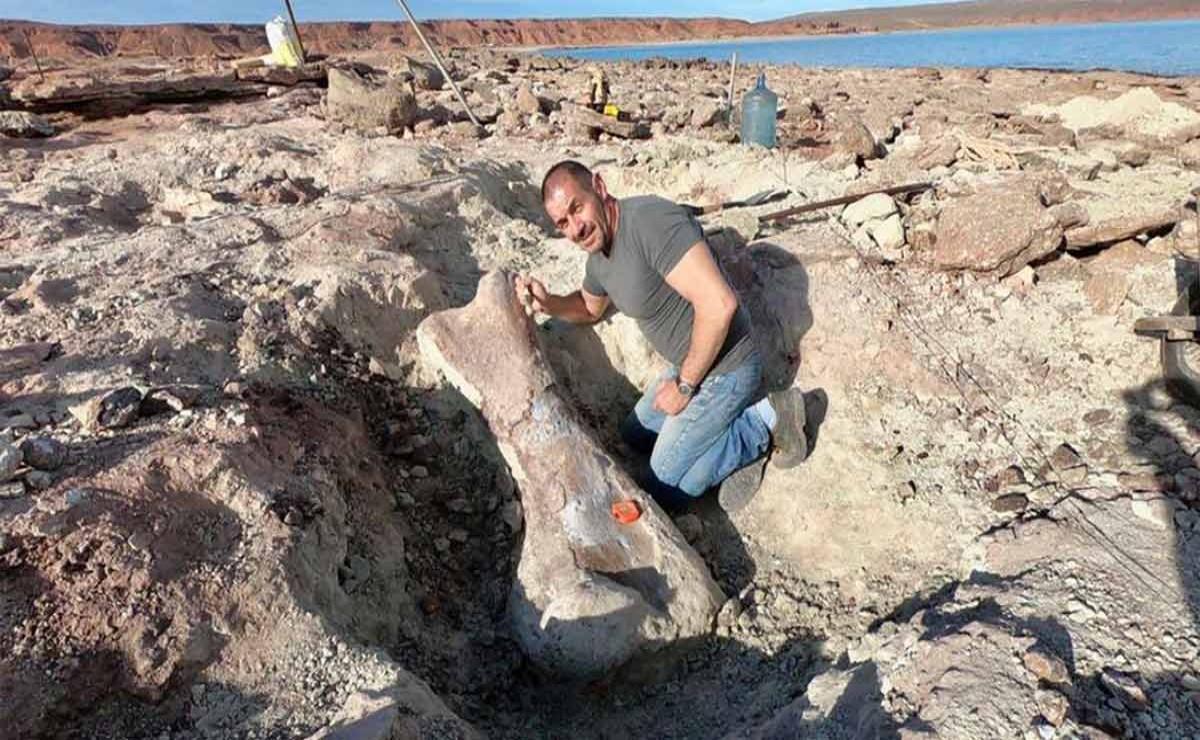 Científicos argentinos descubrieron un nuevo dinosaurio en la bajante del lago Los Barreales, según informó el medio La Mañana de Neuquén