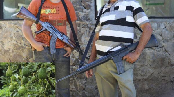 Se 'levantan en armas' los aguacateros para defender sus cosechas