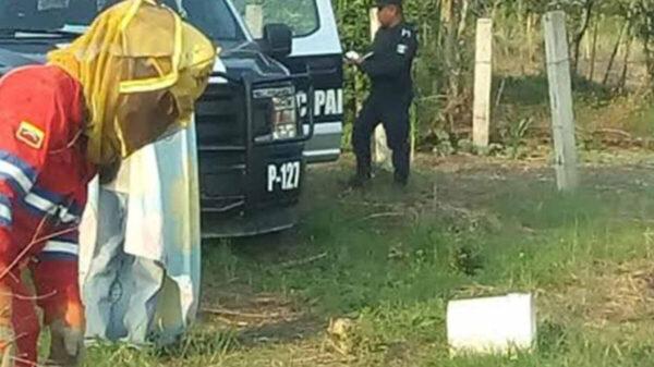 Ataque de abejas en Hidalgo deja una abuelita muerta y un herido (Foto de archivo)