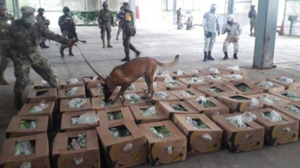 Tractocamión llevaba presunto cargamento de plátano; resultó ser cocaína