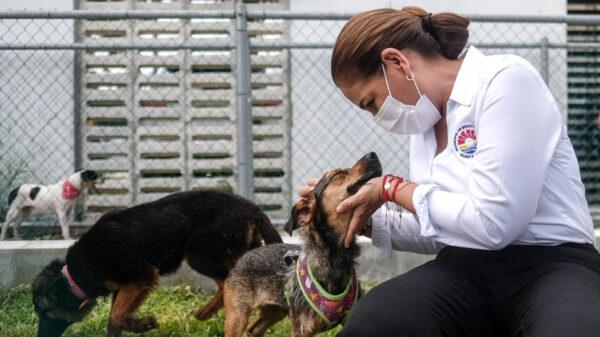 Promueve gobierno de Cancún bienestar integral para animales domésticos