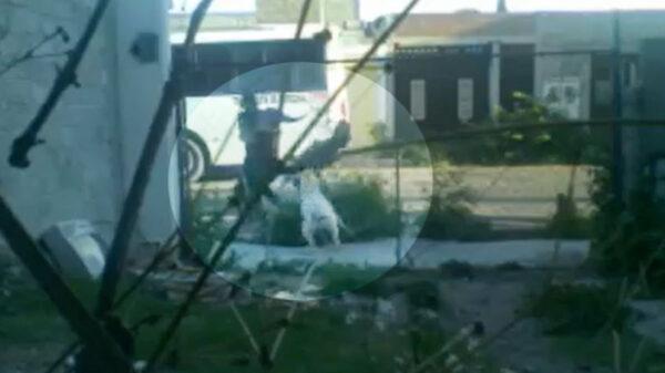 Menor de 11 años es atacado por un perro pitbull en la calle