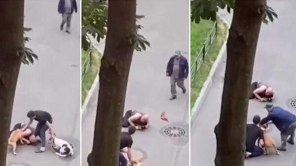 Dos perros atacan a su mascota y él la protege con su cuerpo