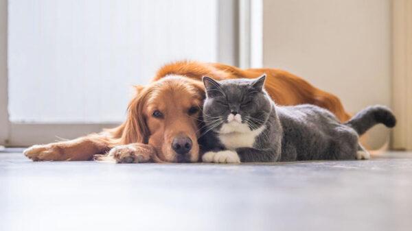 ¡Cuidado! Los gatos son más propensos a enfermarse de Covid que los perros